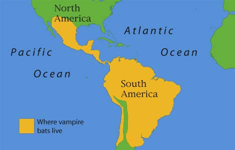 a map of where you will find the vampire bat